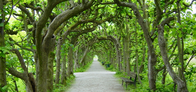 Tree Walk in Dachau Castle Garden